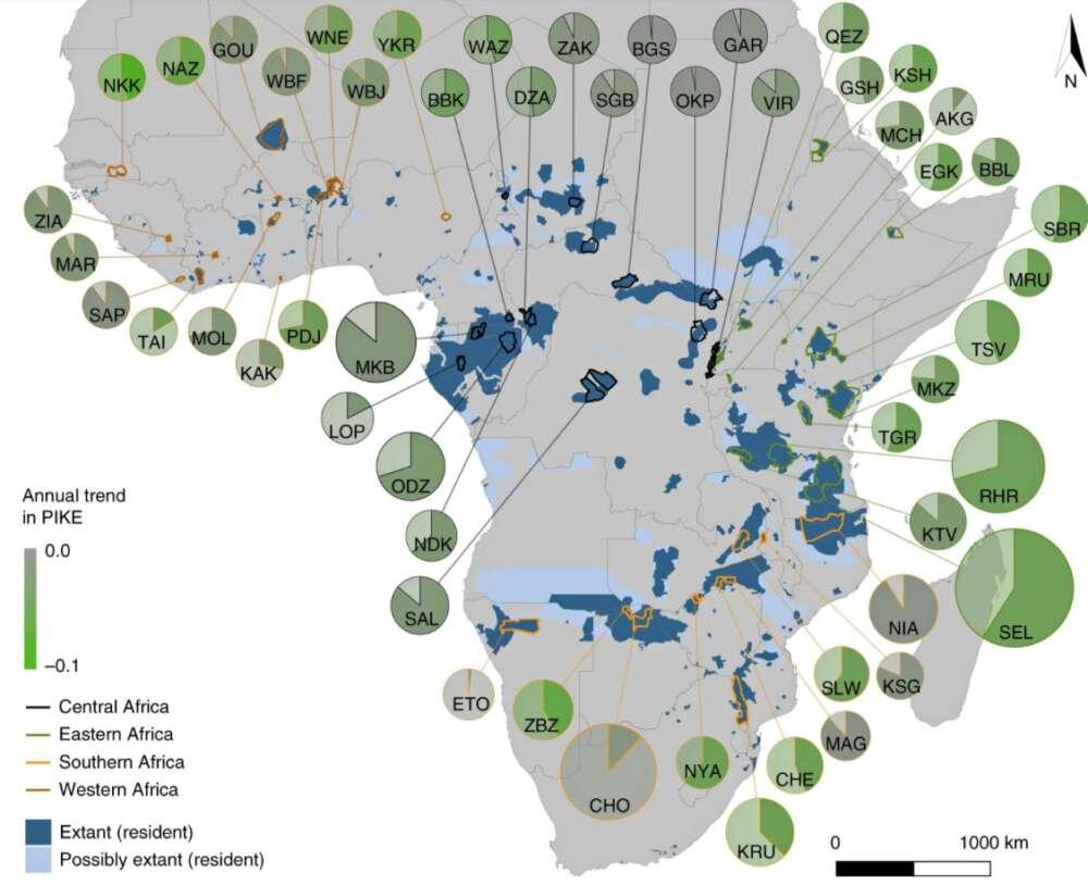 Poaching of African elephants
